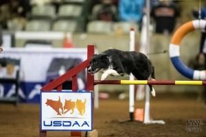 USDAA Cynosport 2013 - Murfreesboro, Tennessee