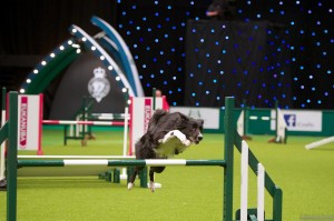 Crufts - The largest dog show in the World 2014 and 2015 - NEC Birmingham, England