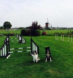 Two dogs and a windmill